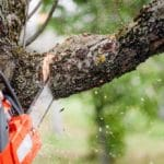 cutting tree down - the wrongful tree cutting act